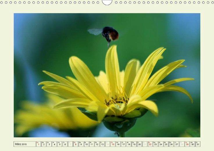 ENERGIEREICH - Artenvielfalt für die Biogasanlage - CALVENDO-Kalender von Kerstin Stolzenburg - http://www.calvendo.de/galerie/energiereich-artenvielfalt-fuer-die-biogasanlage-2/ #gelb #blumen #flowers #yellow #calendar #Kalender