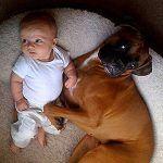 Bimba+di+9+mesi+smette+di+respirare:+il+cane+sveglia+i+genitori+e+la+salva
