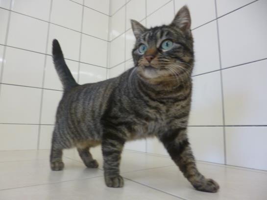 Chiens et chats à adopter à la SPA de Mâcon.