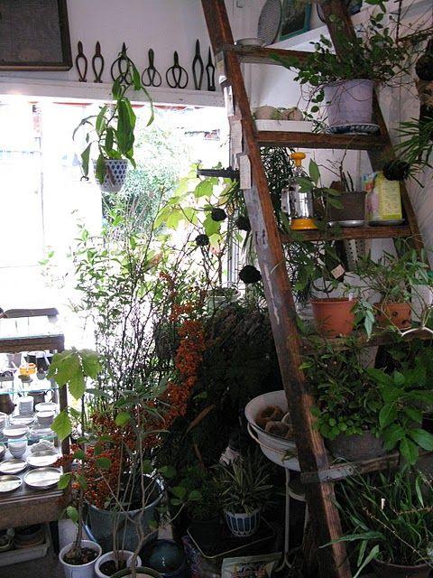 ladder for plants