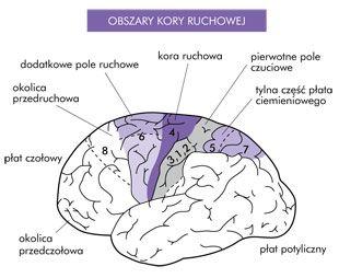 Stymulacja mózgu. Zobacz jak może pomóc swojemu dziecku.
