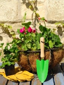10 Things You Should Know About Containers (But Probably Don't) - This Garden Is Illegal