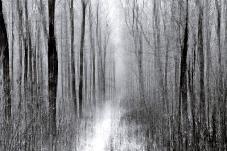 Pölcz Klaudia - kisklau: Deres, ködös reggel