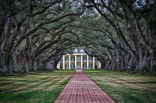 Truly Southern...love the old oaks over the drive!!