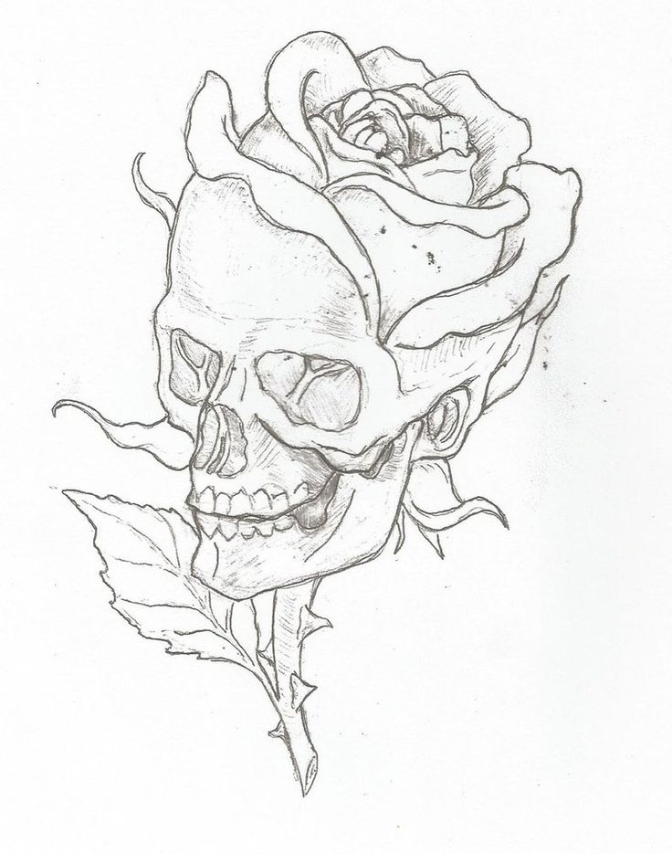 Skull Line Drawing Easy : Pin by roxanne on skullies pinterest tattoo
