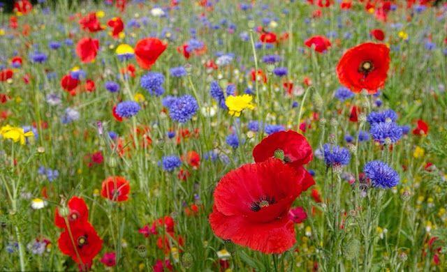 Ennyi: Wildflowers – Vadvirágok - - Az életed olyan legyen, mint egy vadvirágé, amely minden nap szépségében és örömében nő. (Németh György)