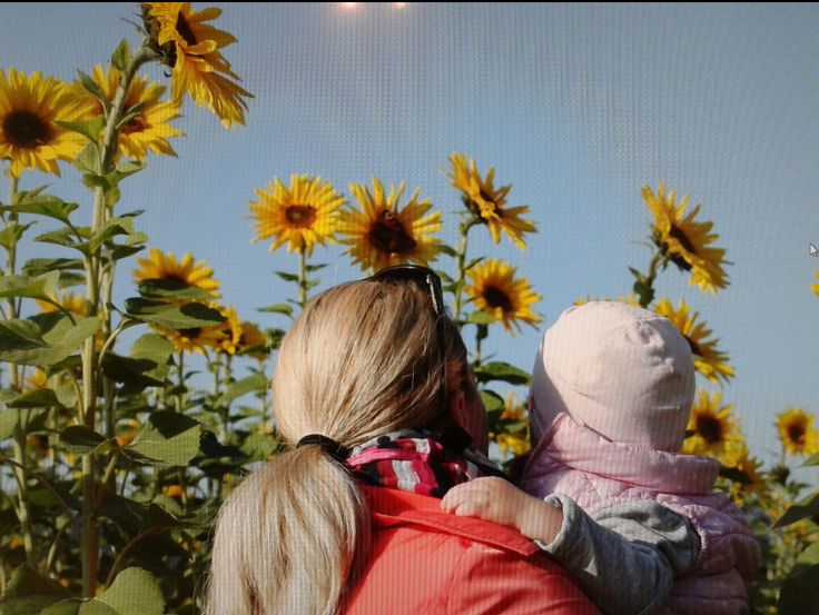 Herbstspaziergang im Sonnenblumenfeld