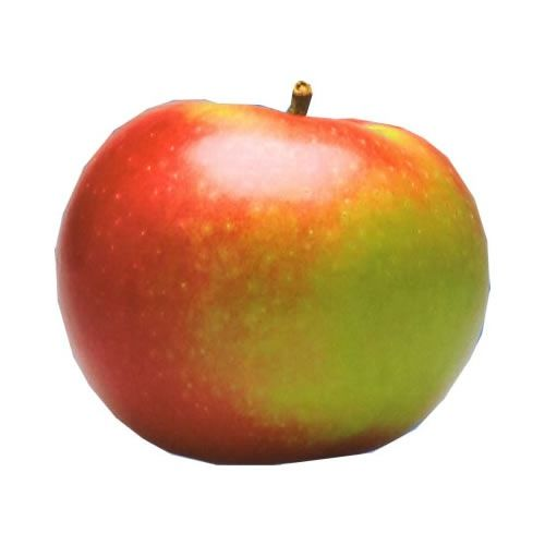 Mcintosh apple.   The mac is  a true ontario apple-  it originated in 1800's as a chance ...