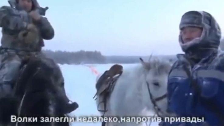 Охота на волков флажкованием