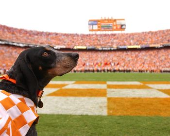 Tennessee's Smokey at Neyland Stadium Picture at Tennessee Men's Photo Store