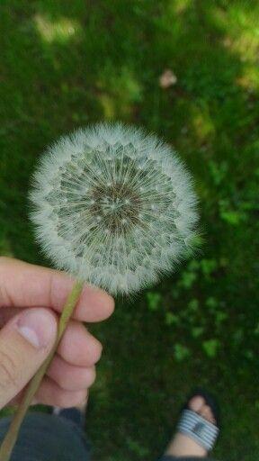Nature,flower