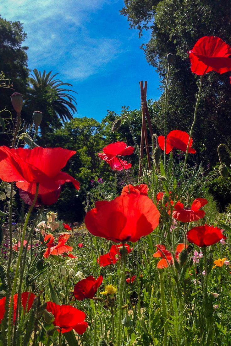 Love flowers & beautiful landscapes? Check out these 7 colorful gardens that you can visit in the San Francisco Bay Area, Silicon Valley, California.