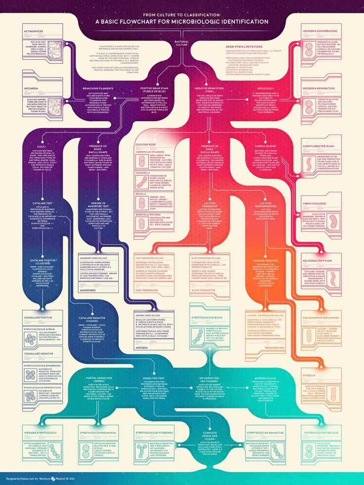 A Basic Flowchart For Microbiologic Identification #Infographic #Health