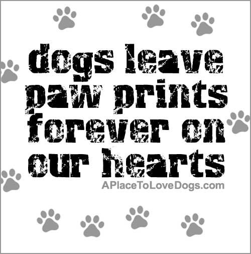 Quotes About Love Dogs : dog quotes love pet quotes nice quotes puppy quotes awesome quotes dog ...
