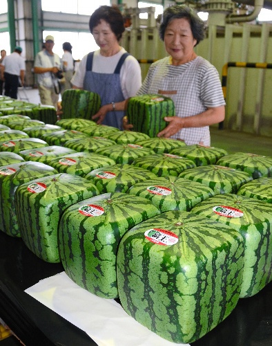 四角いスイカ square-shaped watermelon. Say what? I guess they need all the room they can get.