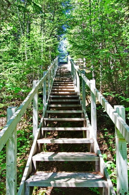 """some of the 2,200 stairs on the Alexander Murray Trail"""