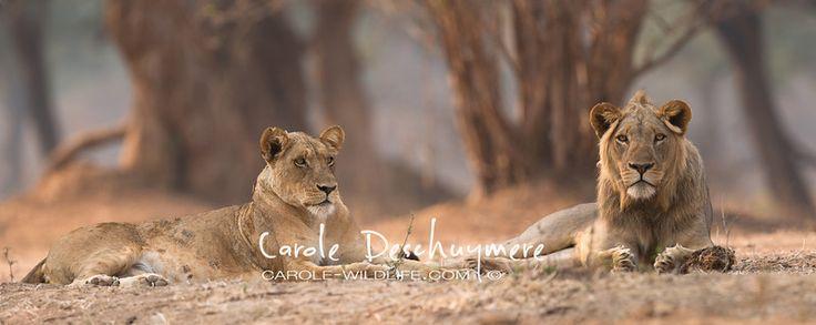Carol Deschuymere has epic photos!!!! Wow!