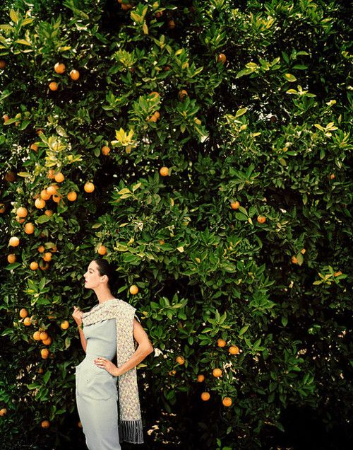 in the orange grove. Anne St Marie for Harper's Bazaar, 1957.Inspiration, Orange You Glad, Anne St, Harpers Bazaars, Fruit Trees, Fashion Photography, Cs Lewis, 1950S Fashion, Vintage Clothing