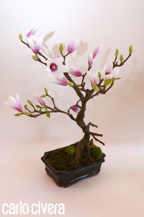 Bonsai pianta magnolia. #bonsai #magnolia