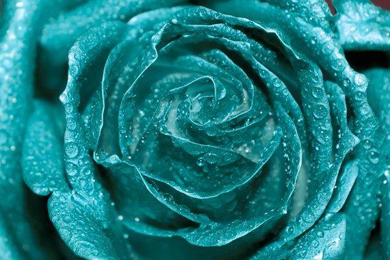 Teal Rose Photo Digital Download Fine Art Photography Rose