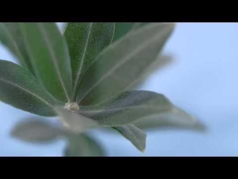 Produktfilm über RINGANA Caps omega 3 vegiplus   natur zum wohlfühlen