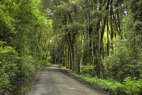 Reserva Bosque Quillin (Lago Ranco - Region de los Rios) by Mushroomen, via Flickr