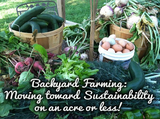 A review of the book Backyard Farming, which provides practical tips and information for providing healthy food for your family in a small space.