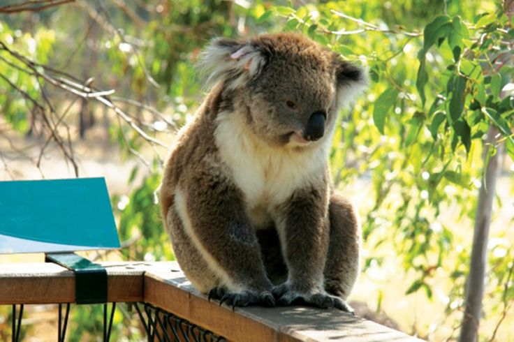 #Australia, famous for its aborigines and kangaroos and its beautiful beaches...