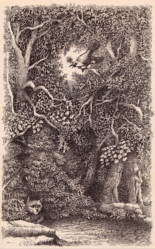 The Bat-Poet - written by Randall Jarrell, illustrated by Maurice Sendak (1963)
