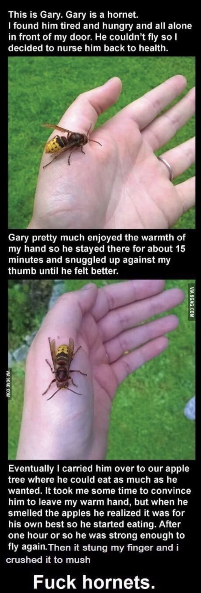 The story of Gary the hornet. Get Daily #funny #fu…