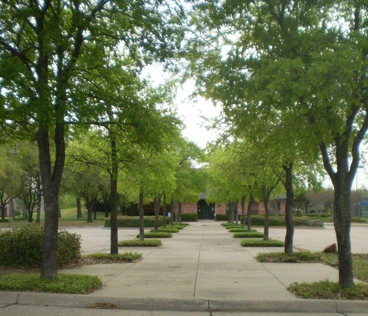 Best Commercial Landscape Design Commercial Landscape: Modern Commercial Landscaping On Commercial Landscape