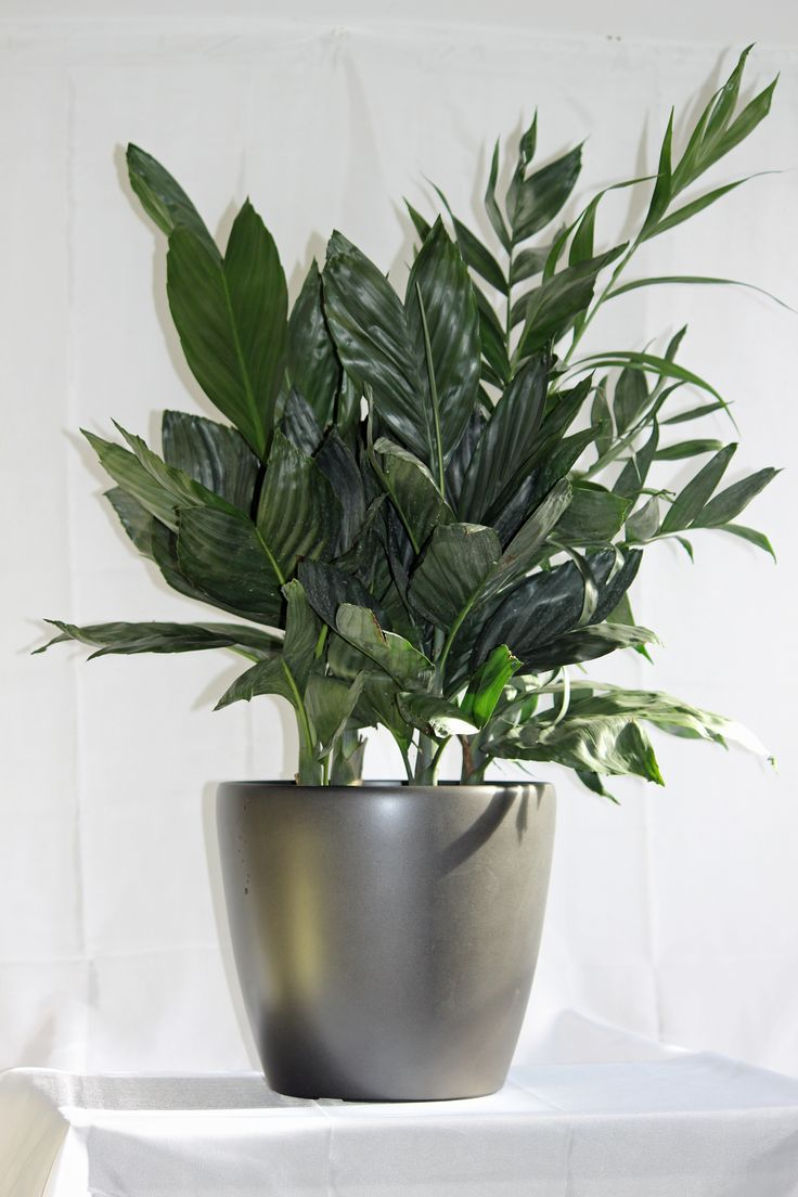 120 best images about house plants care on pinterest for Maintenance of indoor plants