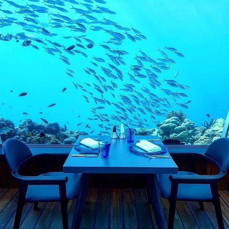 The Best Underwater Restaurant Ideas On Pinterest - Take a look inside europes first underwater restaurant