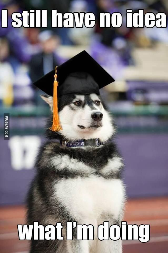 f0f17d20a2adfc43363612adc9c05b56 college graduation graduate school 15 best grad humor images on pinterest graduation parties, high,Congratulations Graduate Meme