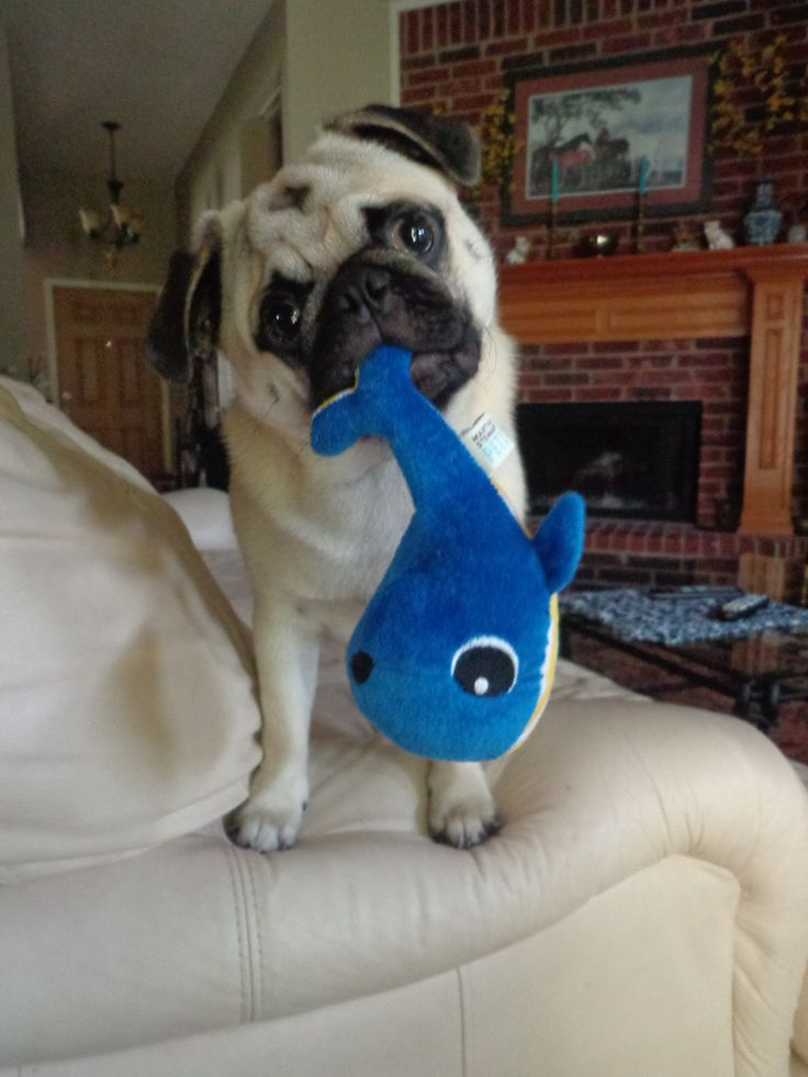 baby Max ( almost  9 months old) with his new fish toy. 6/25/13