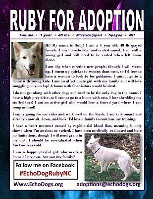 Hoffman Estates Il German Shepherd Dog Meet Ruby A Pet For