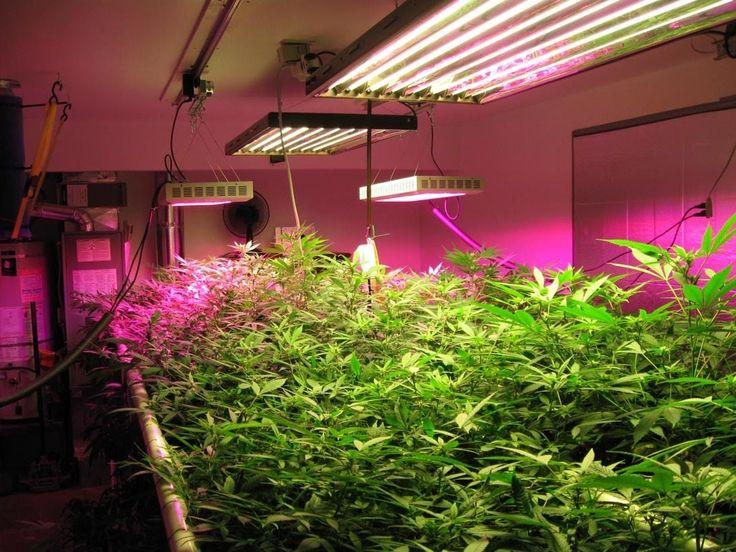 Best Led Grow Lights For Seedlings