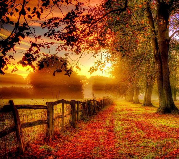 Fall Sunset Autumn Scenery Autumn Landscape Scenery