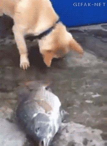 Dog trying to save the fish....Jim Earthling