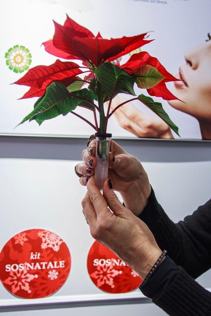 ultimo post per natale al verde come recidere le stelle di Natale e creare composizioni floreali per la tavola.  Dana Garden Design