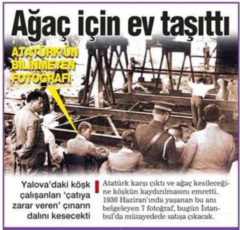 Atatürk'ün bir ağaç için yaptığı inanılmaz mücadeleye bakıp,Yayalaştırma Projesi(!) altında Gezi Parkı'nın yok edilmeye çalışılmasına ve 3.köprü yapımı için  yüz binlerce ağacın katledilecek olmasına söyleyecek söz bulamıyorum!Biinlerce kez yazıklar olsun!!!