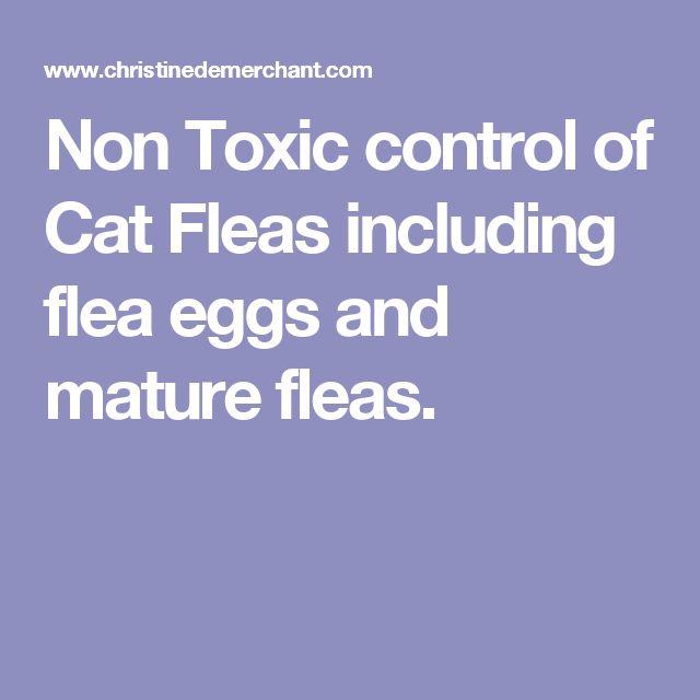 Non Toxic control of Cat Fleas including flea eggs and mature fleas.