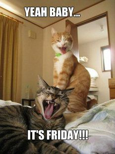 its friday meme drunk - Yahoo Search Results