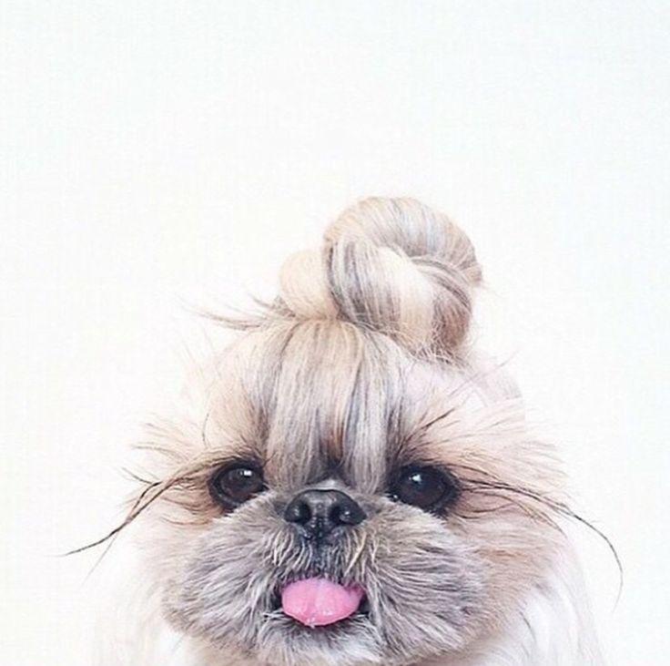 Sunday is bun day