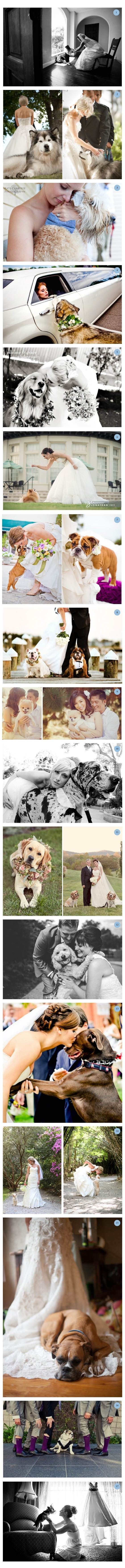 Having your puppies on your wedding day! I wish I could do this with my baby girl, but at least she's in a better place.: