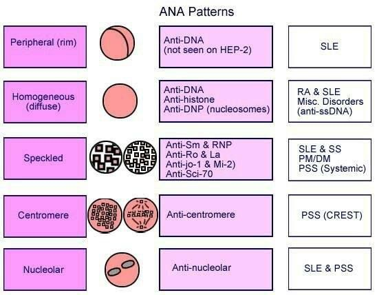 "The ANA Blood Test: ""The antinuclear antibody (ANA) test is ordered to help screen for autoimmune disorders and is most often  used as one of the tests to diagnose systemic lupus erythematosus (SLE). Depending on the person's symptoms and the suspected diagnosis, ANA may be ordered along with one or more other autoantibody tests.""  (from #Lupus and Me FB - click for more)"