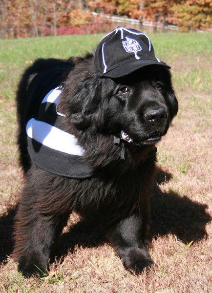 70 best Big dog gifts images on Pinterest | Dog gifts, Dog ...