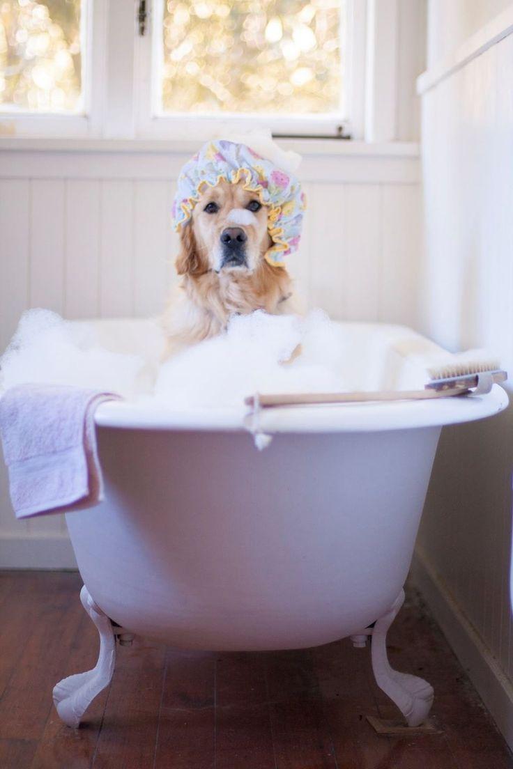 Bath day.