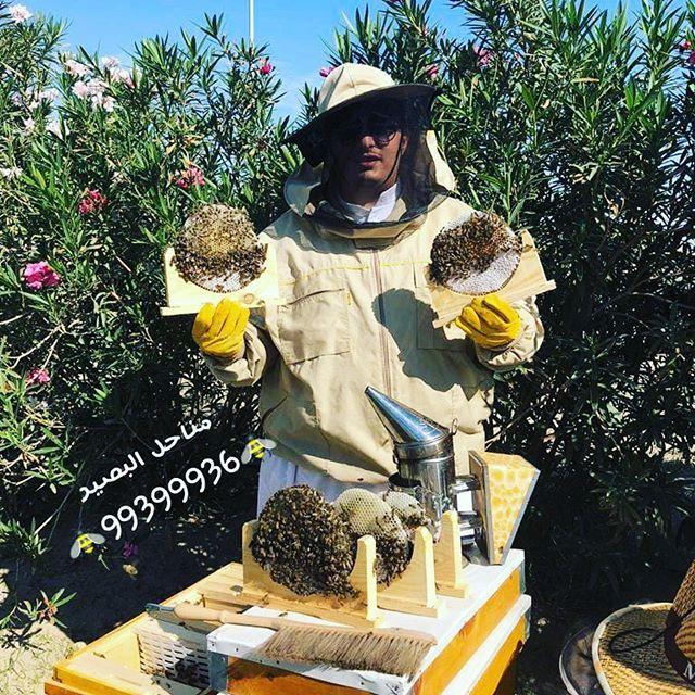 مناحل البصير نحل الكويت Background Pic Honey Bee عسل خلية نحل نحل صور تصويري مناحل البصير نحل الكويت Backgroun Honey Bee Bee Pics