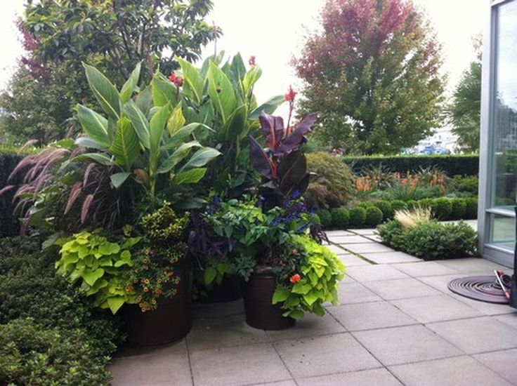tropical garden pots ideas my gallery